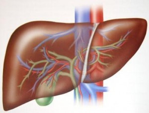 transaminasi got insieme alle transaminasi gpt controllano il fegato