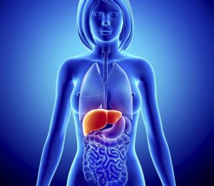 ipertransaminasemie biopsia epatica
