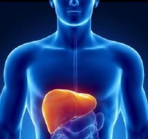accumulo di grasso nel fegato NASH