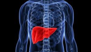 steatoepatite non alcolica accumulo di lipidi nel fegato