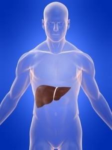 Il fegato tra le principali cause delle transaminasi alte