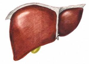 Le transaminasi alte nei bambini si spiegano con qualche problema al fegato