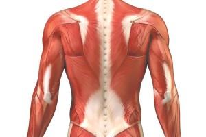 danno muscolare aumento dei livelli sierici della creatinchinasi